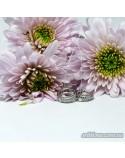 Серебряные круглые серьги с фианитами (арт. 420636)